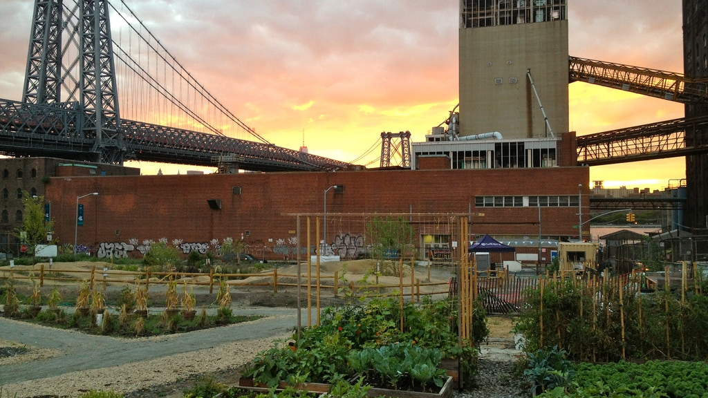 Grow Urban Farms in Brooklyn's Empty Lots project video thumbnail