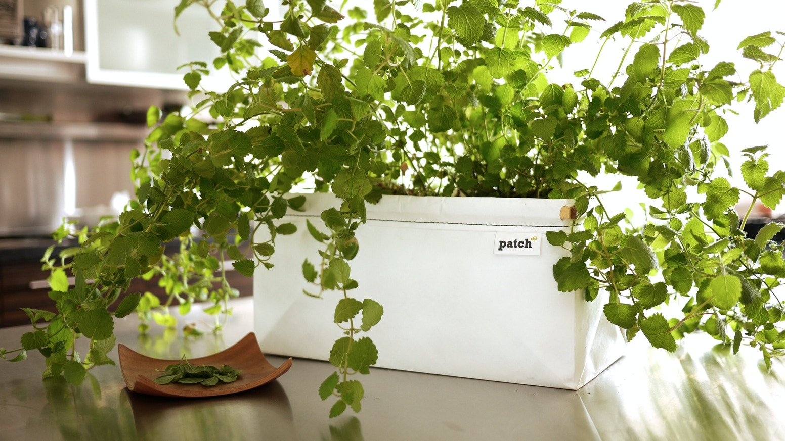 Let's Patch makes growing your own food easy. Self-watering and compact,  it's