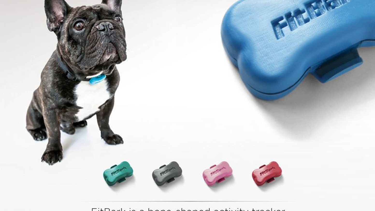 FitBark monitors your dog's everyday activity and turns it into BarkPoints so you can track progress. It's a new way to understand your dog's health, explain changes in behavior, and make better decisions with your vet.