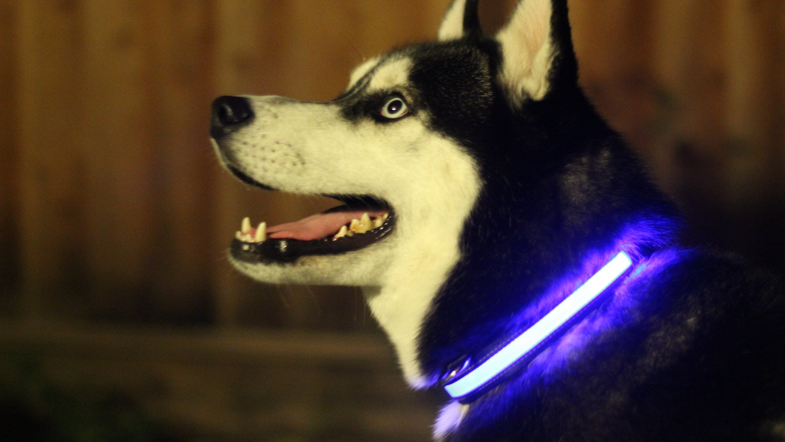 Mission: SAVE LIVES. HALO MINI is an illuminated collar for our best friends. BE SEEN, BE SAFE!