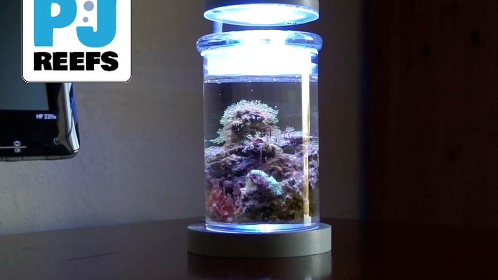 PJ reefs Miniature Saltwater Aquarium project video thumbnail