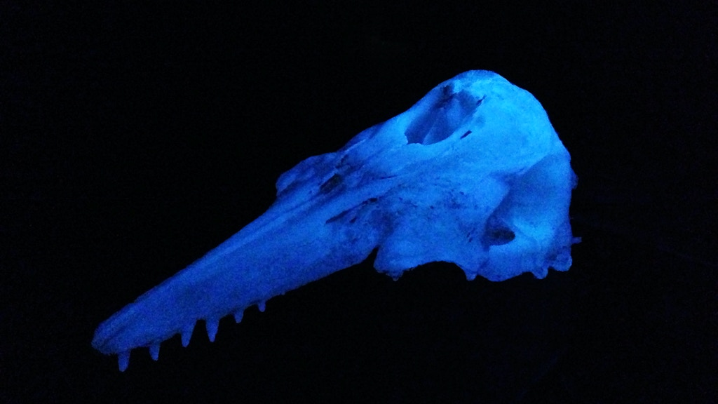 The Glowing Beluga Whale Skeleton project video thumbnail
