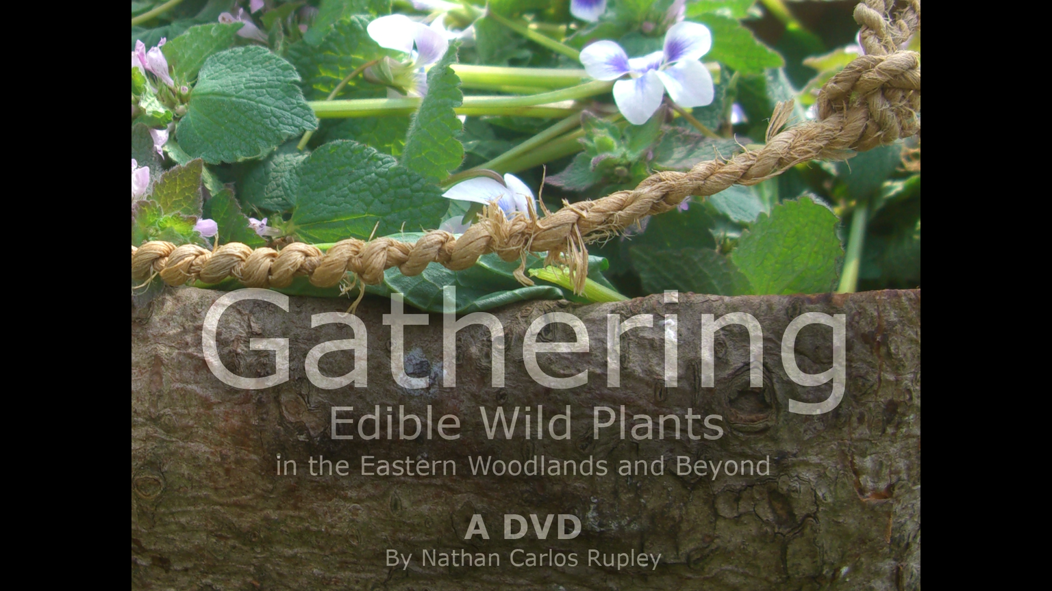 Gathering edible wild plants dvd by nathan carlos rupley for American cuisine dvd