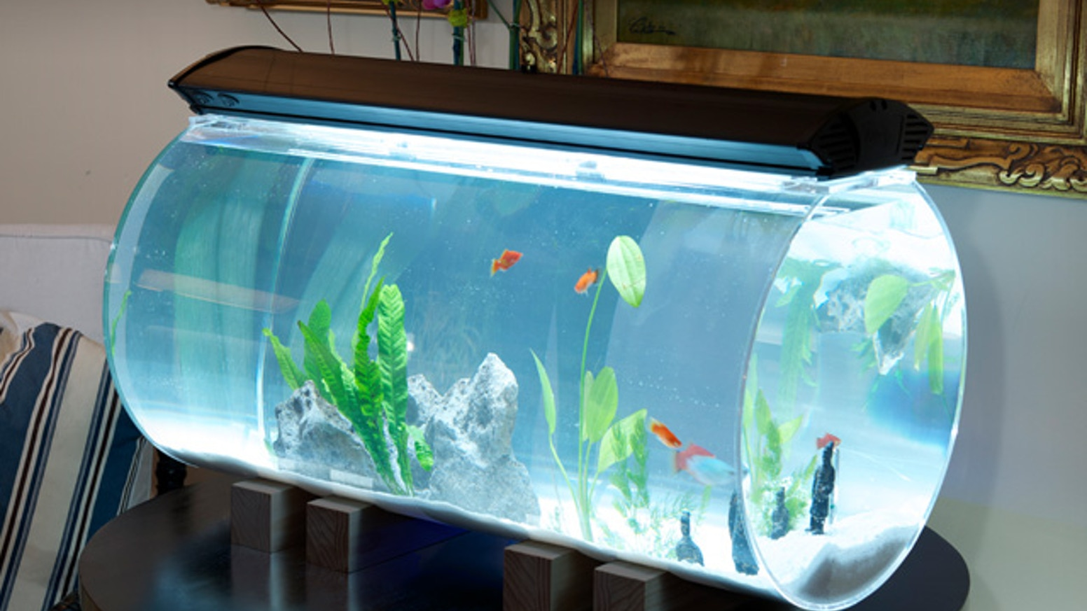 Isn't it about time the Aquarium got a design upgrade? Lets unite beautiful living spaces with beautiful Aquariums. ***Aquariums are now available for purchase, just message me!***