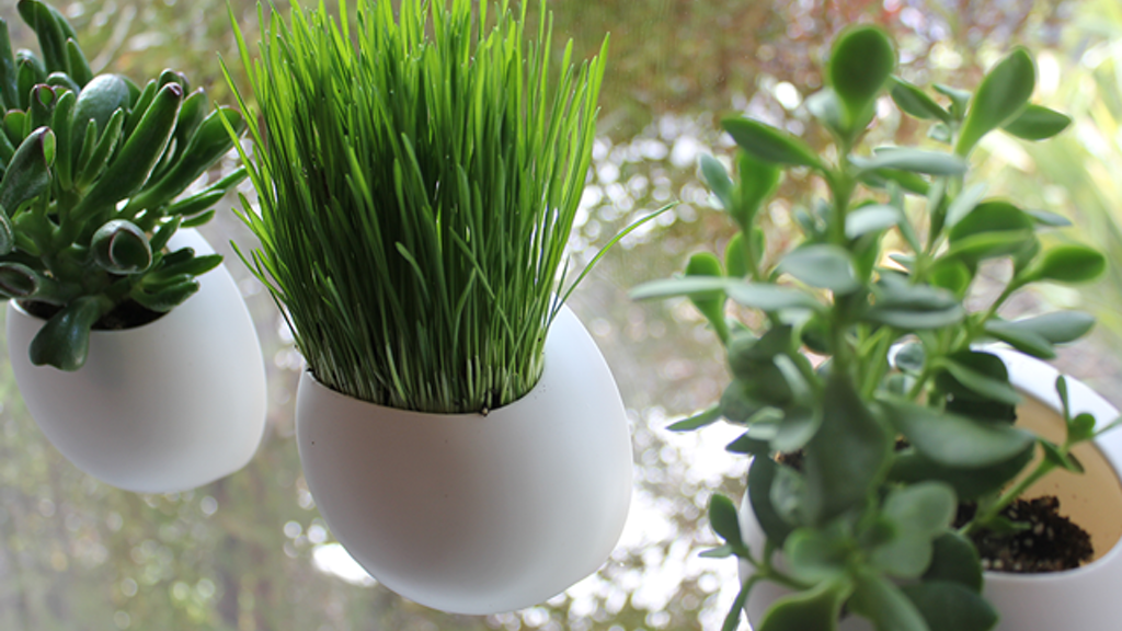 Window Pods - The Perfect Indoor Garden project video thumbnail