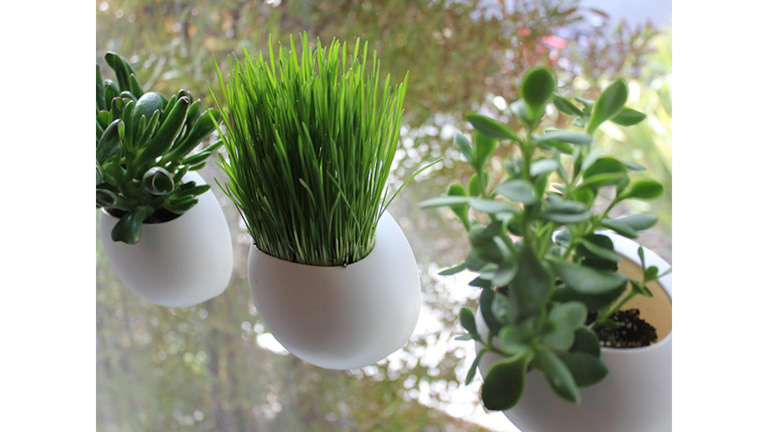 window pods the perfect indoor garden chad garden pod