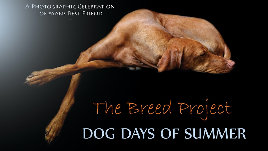 Dog Days of Summer - Part II project video thumbnail