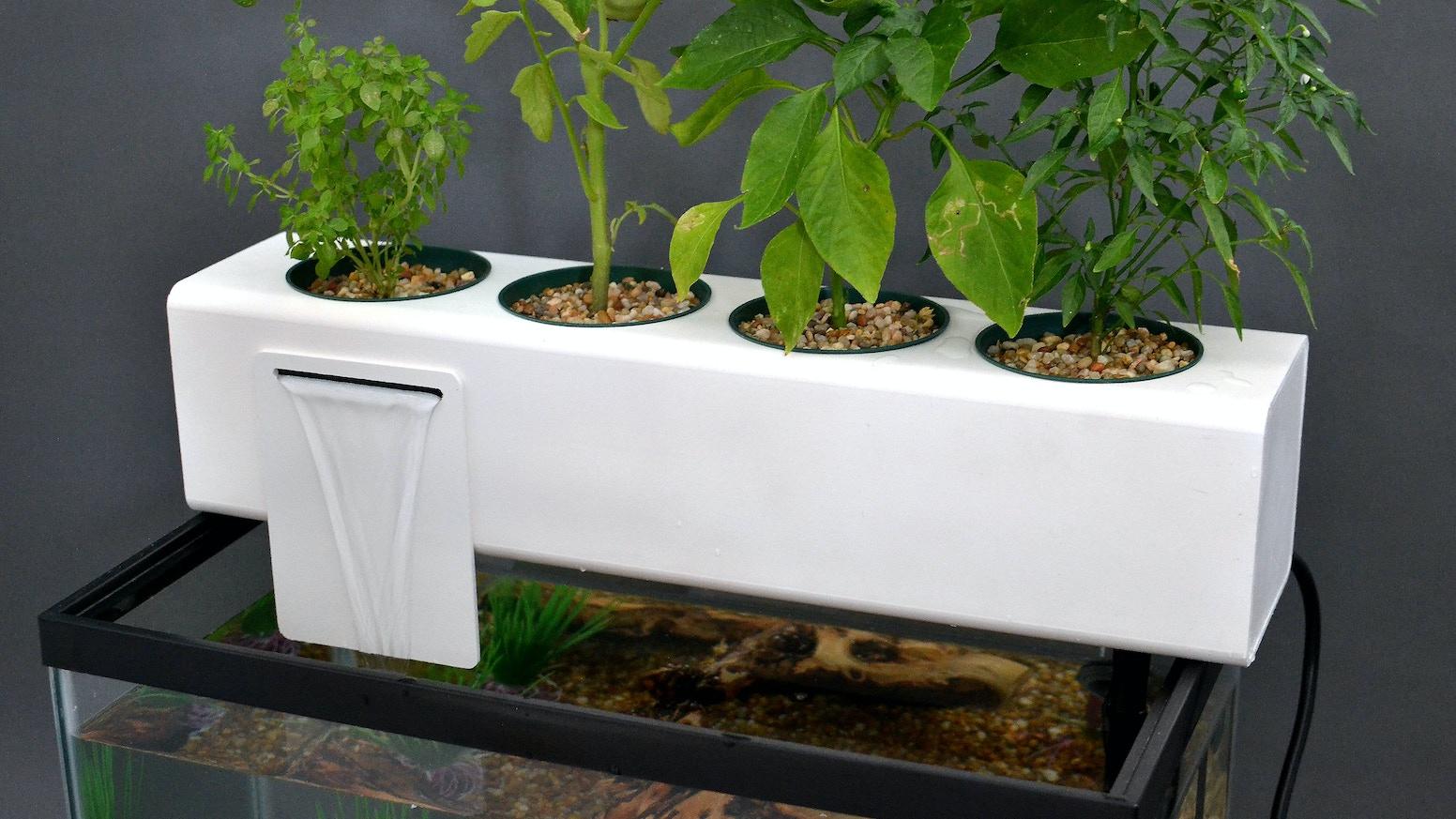 The blue green box by andrew de melo kickstarter for Aquaponics aquarium