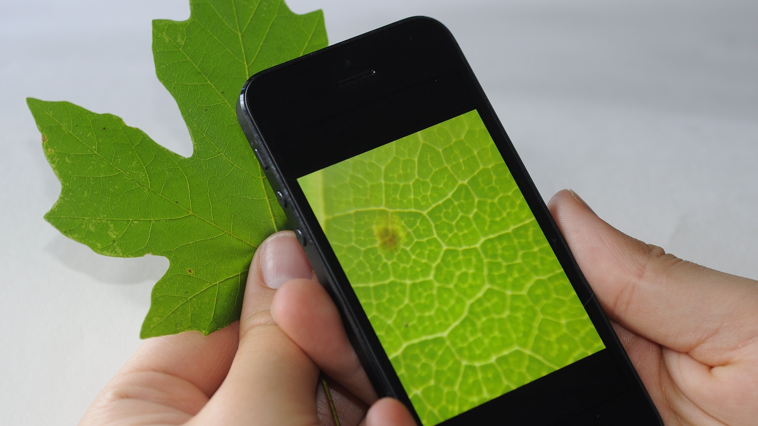 Turn your cell phone or tablet into a microscope with this amazing lens! Works with iPhone, Android and more.
