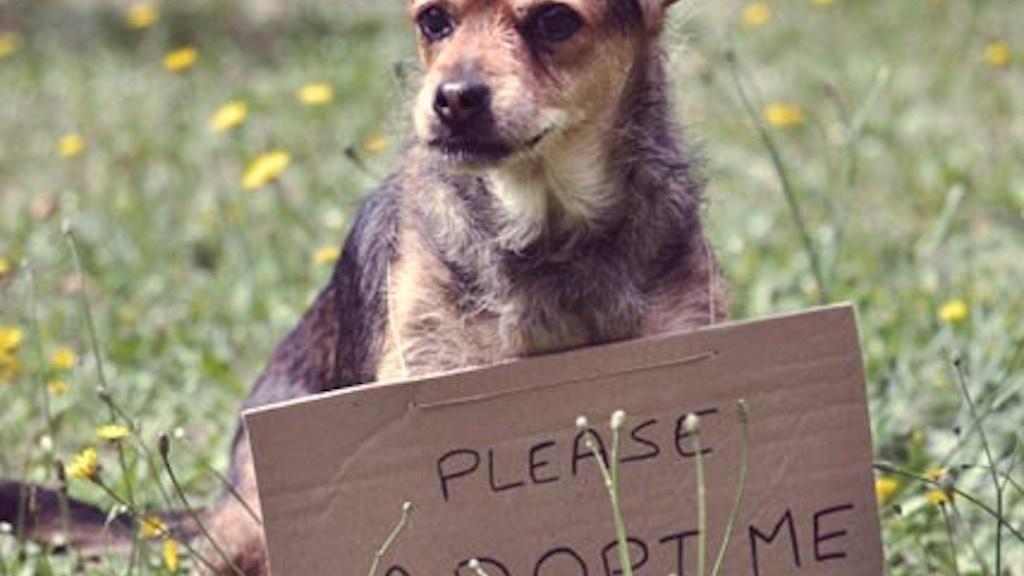 He Chose Me -  The joy of loving a senior dog project video thumbnail