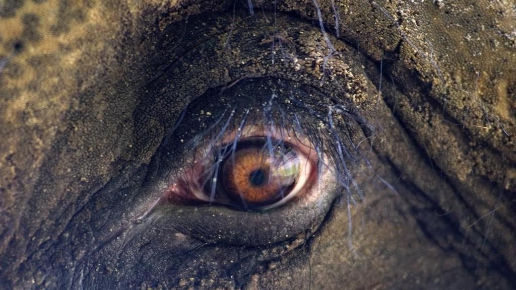 WORLD PREMIERE: ARTIST ELEPHANT RAMA & A CONSERVATION ARTIST project video thumbnail