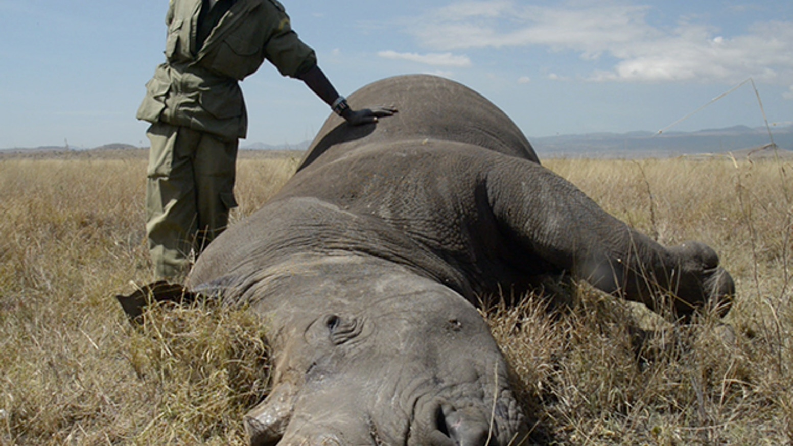 The Last Animals: A documentary film by Kate Brooks about Africa's poaching epidemic.