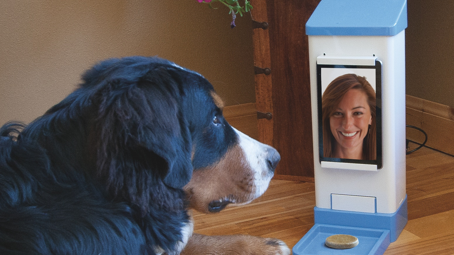 iCPooch -- Internet Pet Treat Delivery & Video Chat by
