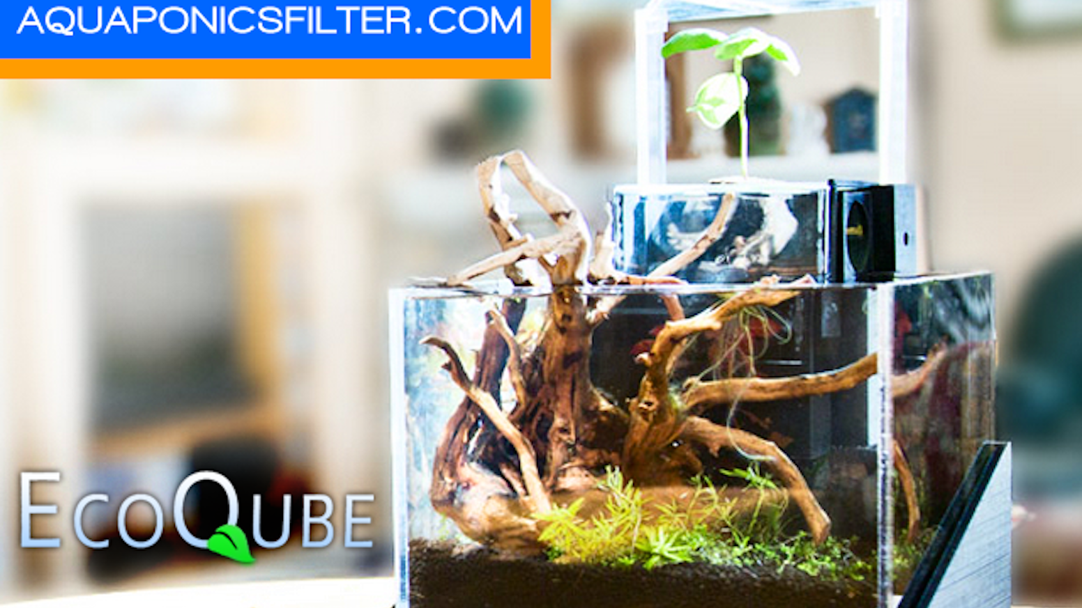 The most beautiful way to grow herbs, house plants or flowers indoor while using the same plants to clean aquarium water with ease!