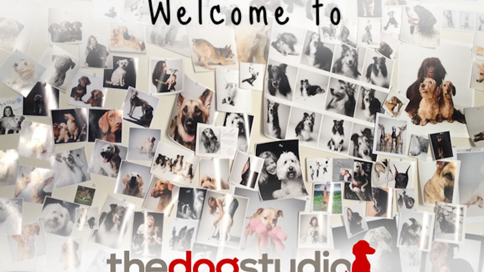 The dog studio a fresh line of greeting cards stationery by the dog studio a fresh line of greeting cards stationery m4hsunfo