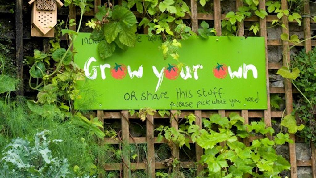 Incredible! Plant Veg, Grow a Revolution project video thumbnail