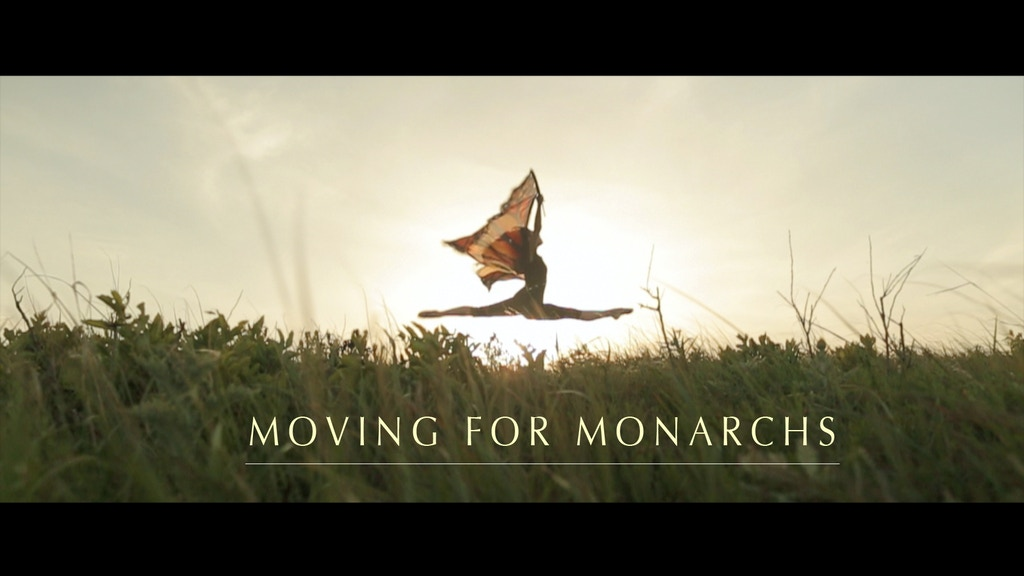 Moving for Monarchs: The Dance of Life project video thumbnail
