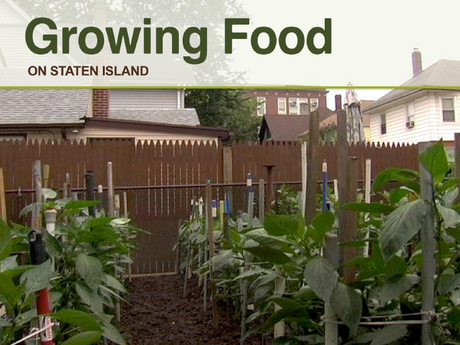 Growing food on staten island by jay weichun kickstarter for Food s bar unloc
