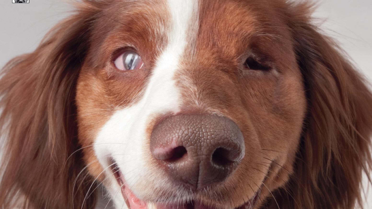Puppy Mill Survivors Photo Book By Melissa Mcdaniel Kickstarter