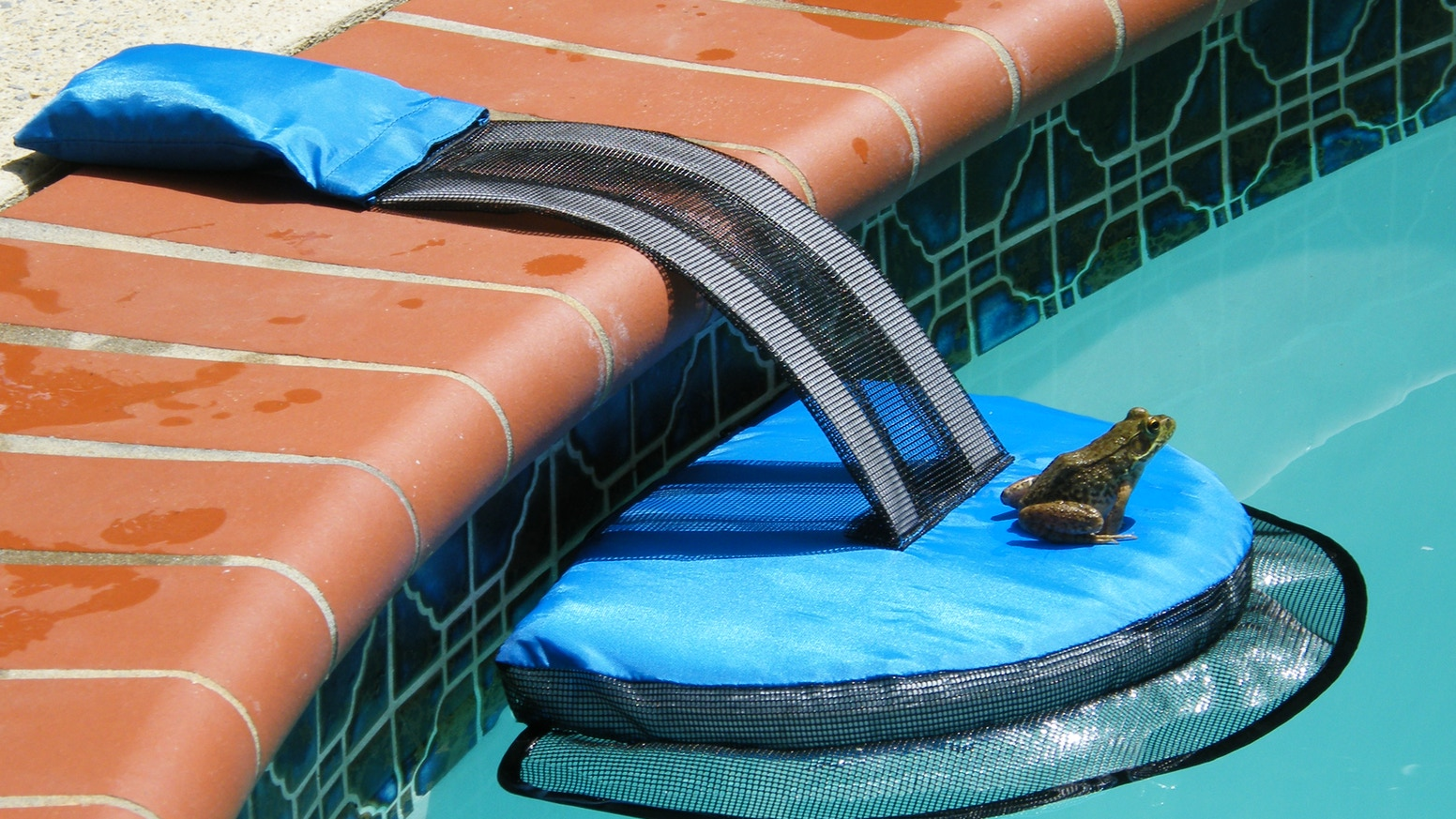 Wildlife Escape Ramp for Swimming Pools by Rich — Kickstarter