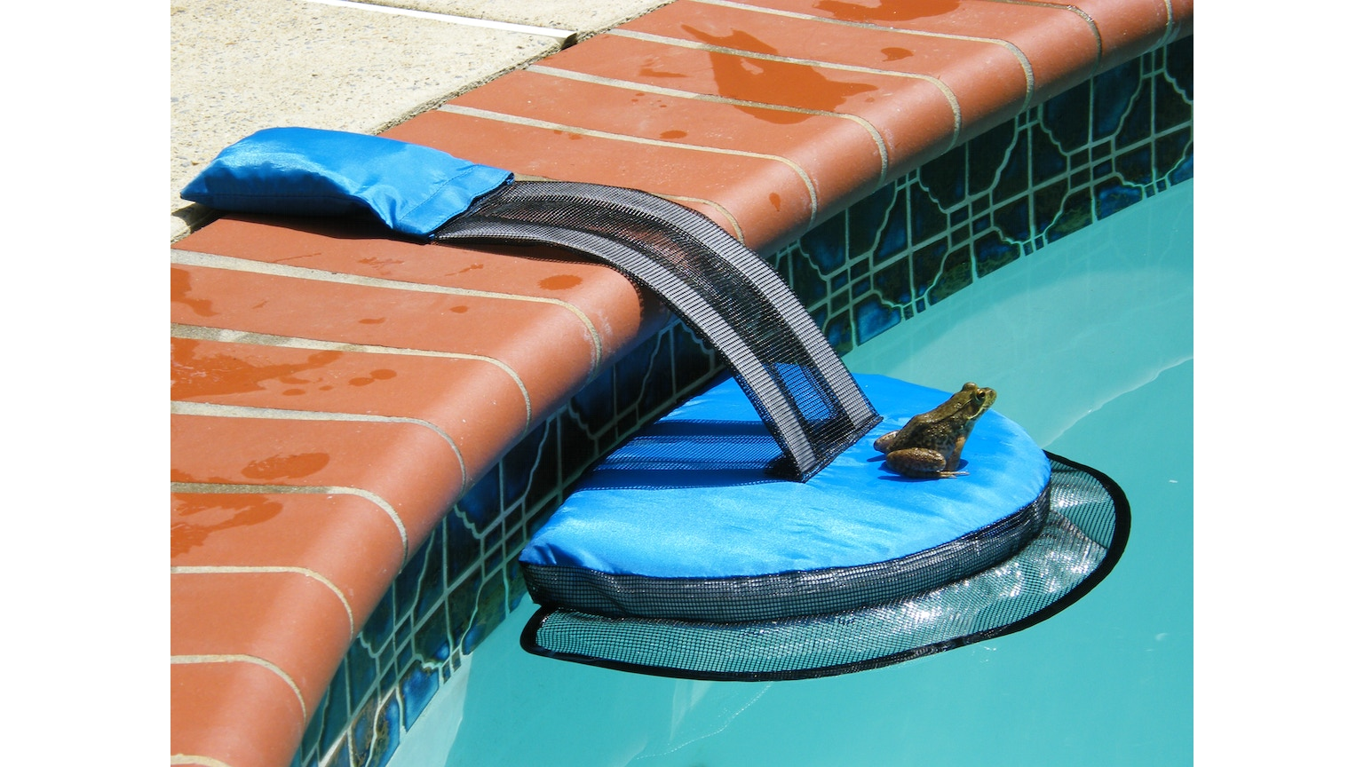 Wildlife Escape Ramp For Swimming Pools By Rich Kickstarter