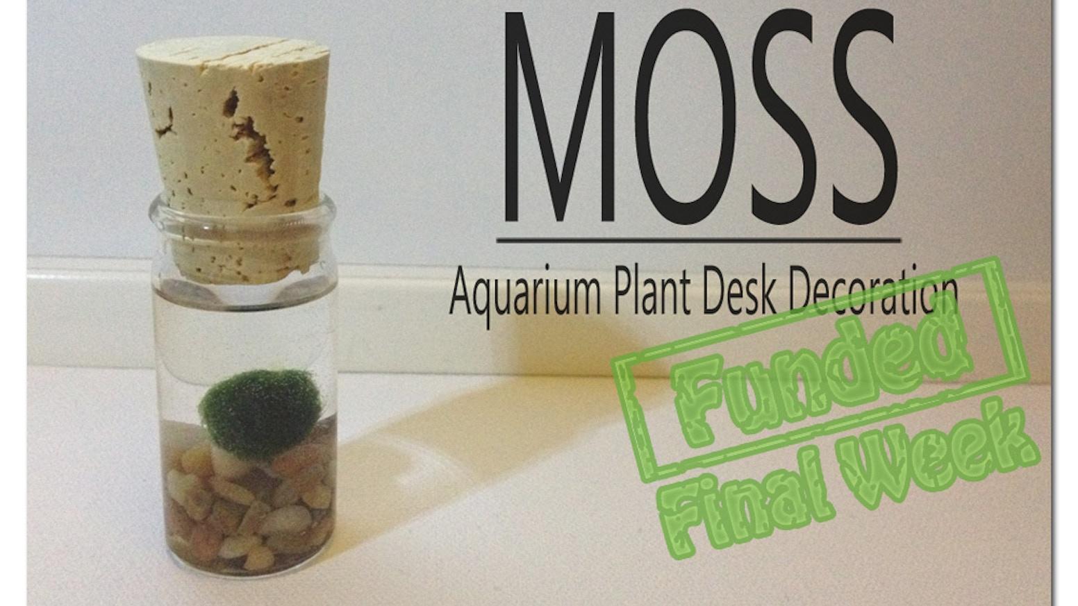 Moss aquarium plant desk decoration by ka ho kickstarter for A link text decoration