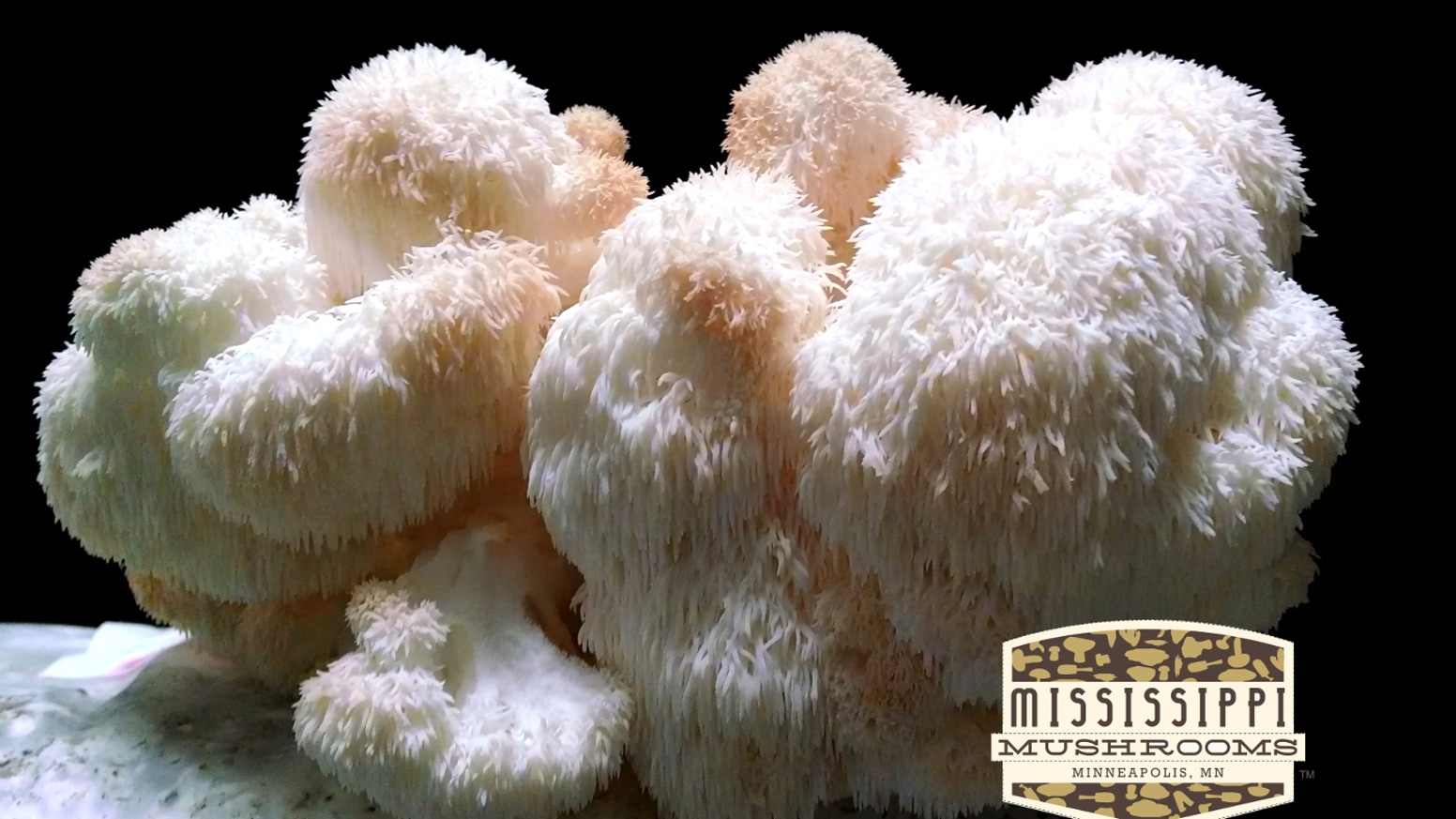 Producing Fresh Mushrooms and Compost Year Round! by