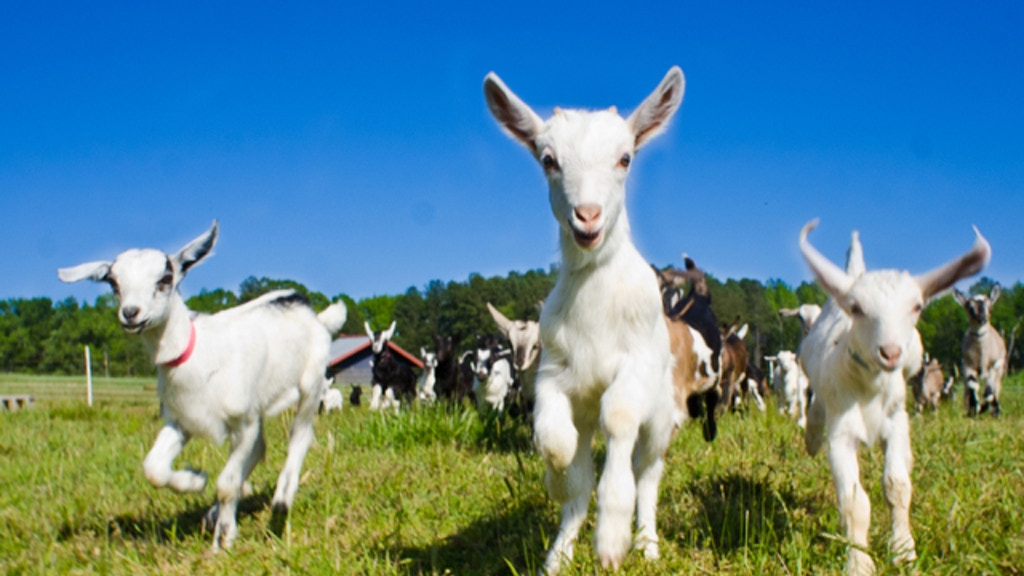 Artisanal Cheese + Beloved Goats = Stronger Community project video thumbnail