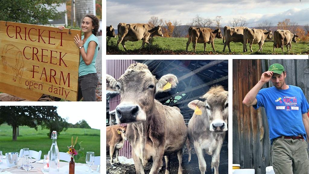 Stone Barn and Solar Power to Sustain Cricket Creek Farm project video thumbnail
