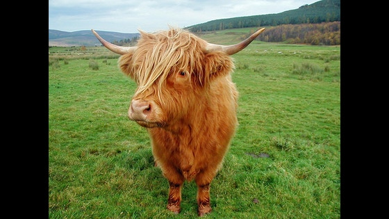 Track The Scottish Satire Project Canceled S Kickstarter