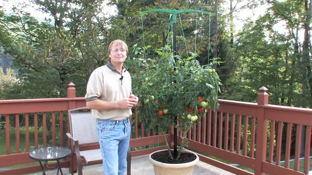 Grow Bigger, Healthier Vegetables with Miracle Stake! project video thumbnail