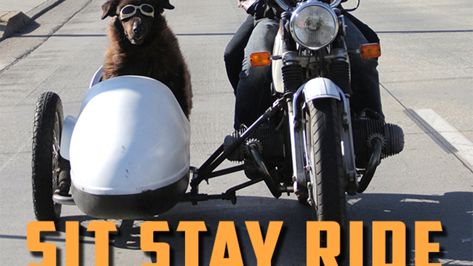 Sit Stay Ride: The Story of America's Sidecar Dogs by Eric Ristau