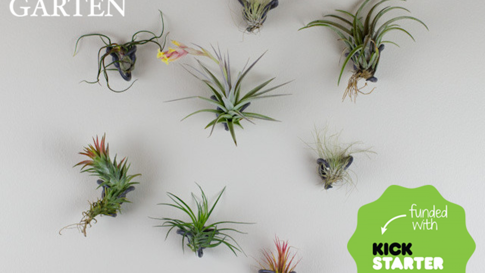 Airplant Nest. A set of organically shaped, durable, flexible fingers that  gently hold airplants on indoor
