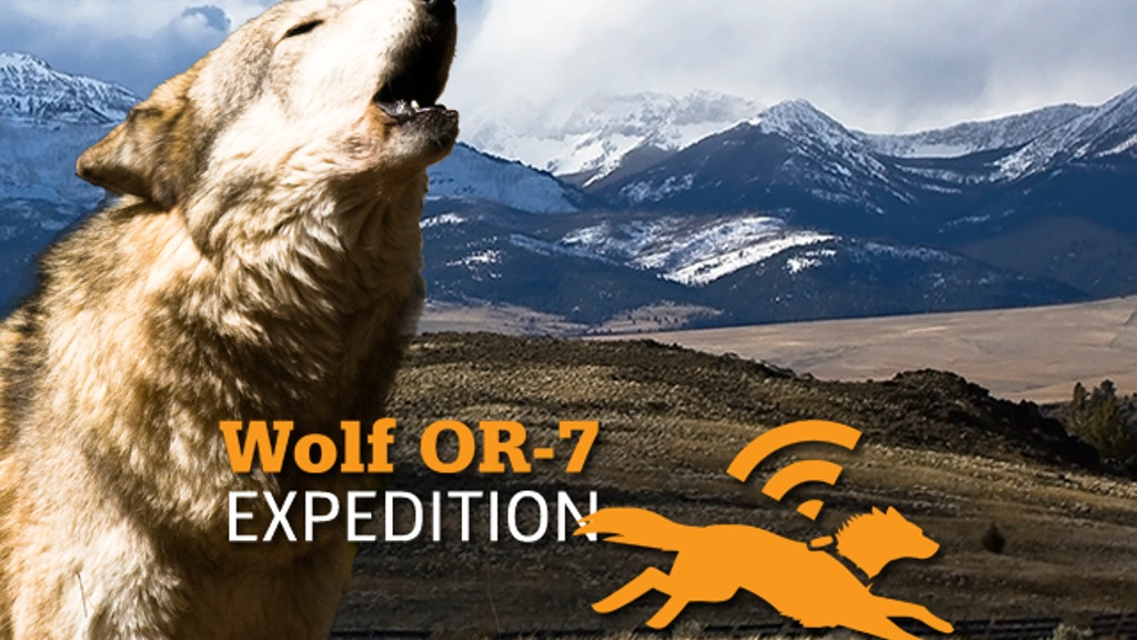 Wolf OR-7 Expedition: 1,200 Miles Following a Lone Wolf. project video thumbnail