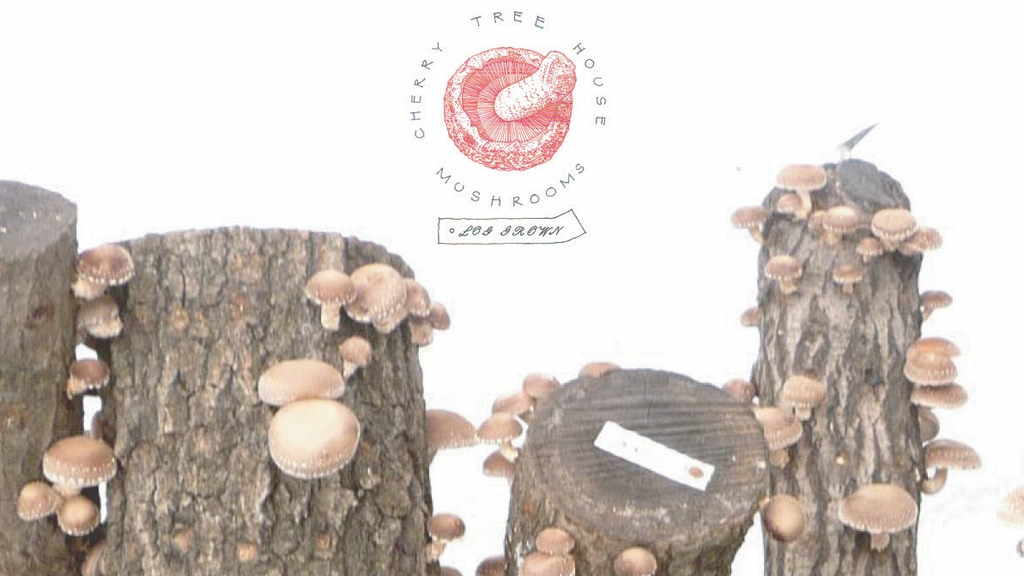 Locafy our Fungi with the CTHM Shiitake Fruiting House project video thumbnail