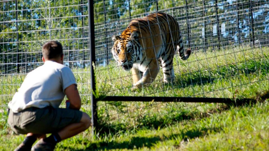 Tiger Creek - The Exotic Pet Ownership Controversy project video thumbnail