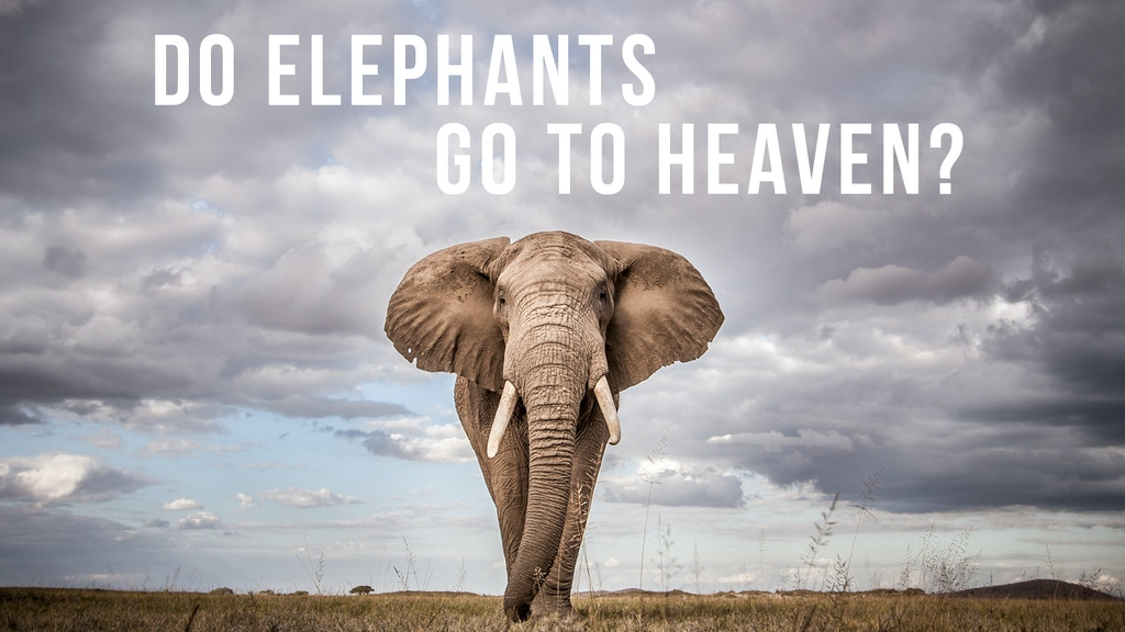 DO Elephants Go To Heaven? project video thumbnail