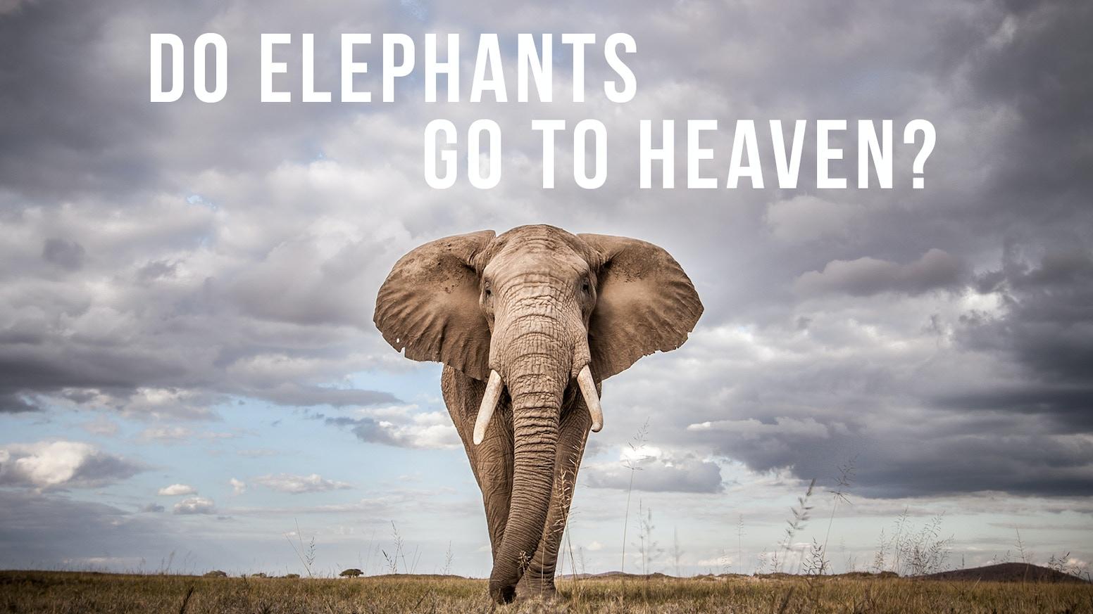 DO Elephants Go To Heaven? by Louise Hogarth — Kickstarter