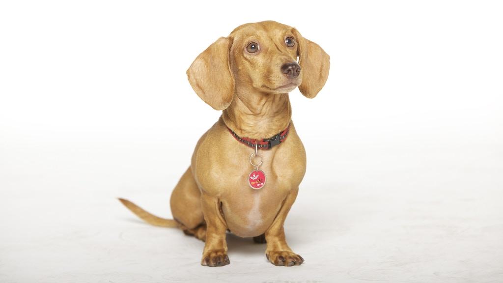 Wiener Dog Internationals project video thumbnail