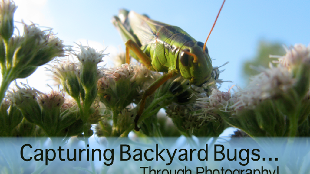 Capturing Backyard Bugs.... Through Photography! project video thumbnail