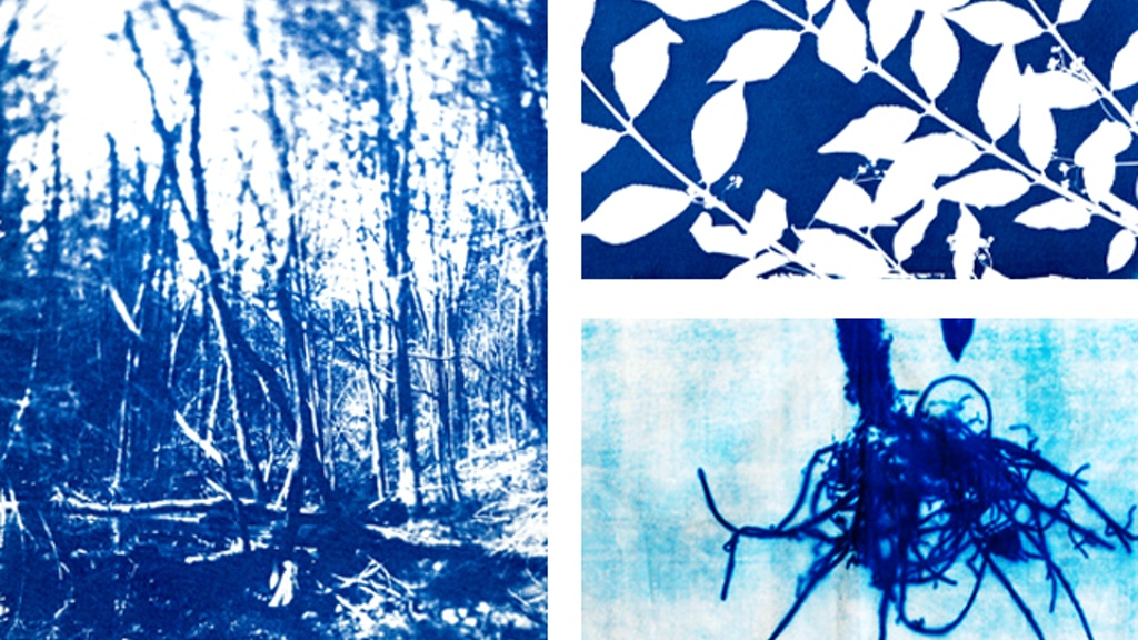 Cyanotype Photography Series -  Residency in Toronto project video thumbnail