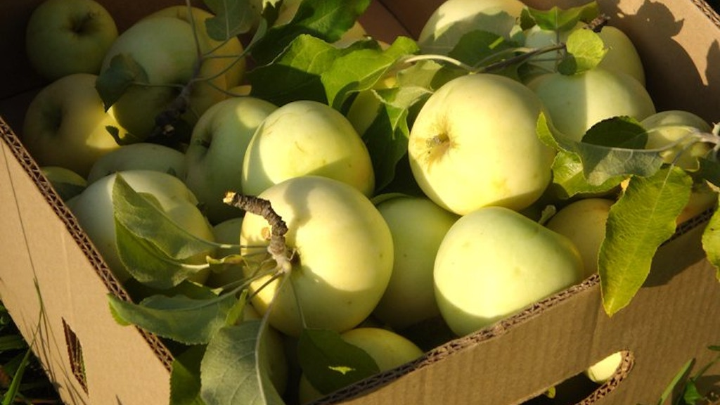 Plant an Heirloom Hard Cider Apple Orchard in New York project video thumbnail