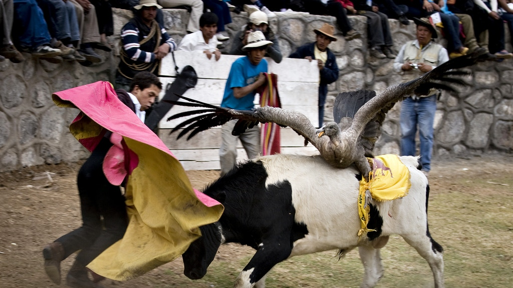 Yawar Fiesta: The visit from a winged Andean god project video thumbnail