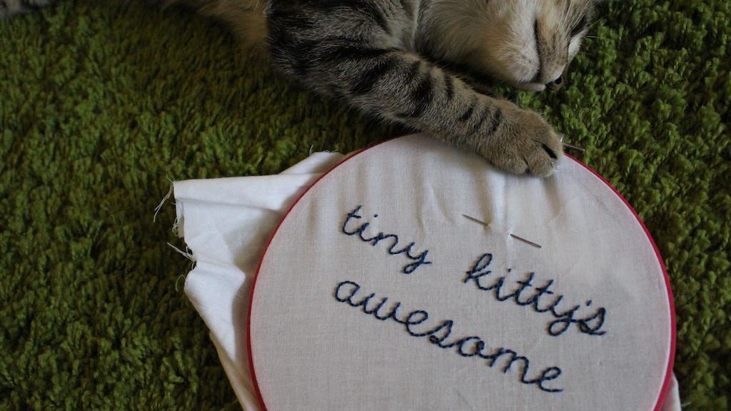 Tiny Kitty — America's next top cat model project video thumbnail
