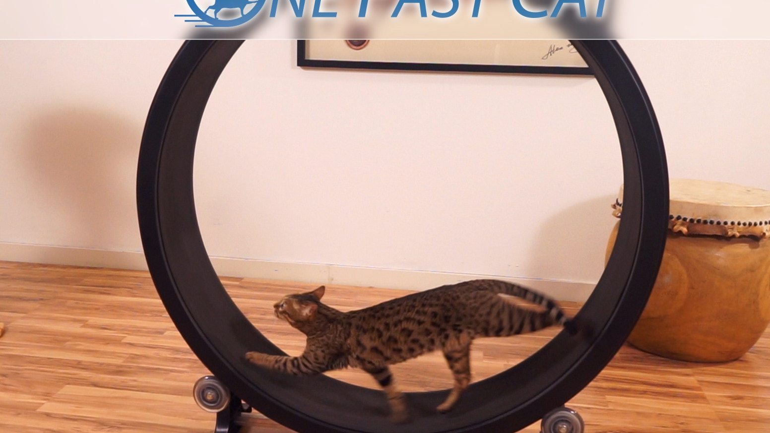 House cats possess a natural hunting instinct, and this product helps them expend that pent up energy. It's an exercise wheel for cats! Now that this project has been funded, you may order a wheel from http://onefastcat.com