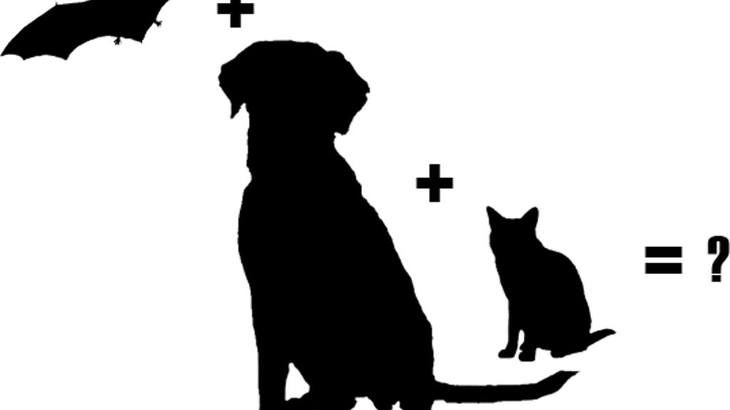 Project image for Bat+Dog+Cat=?