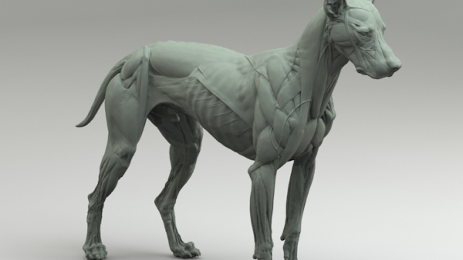 Canine Anatomy Sculpture By S D Lord Kickstarter
