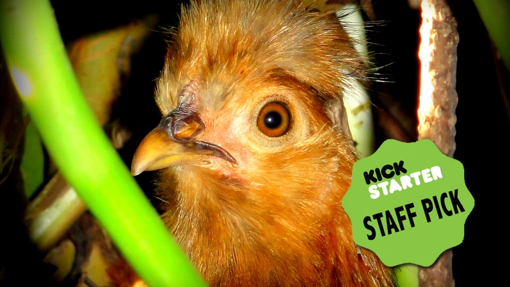 Free Range Chicken Coop for Rural Andean Farm. #VamosChicken project video thumbnail