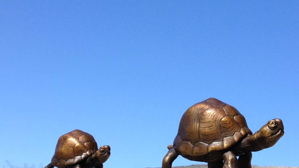 Bronze box turtles. Or are they tortoises? project video thumbnail