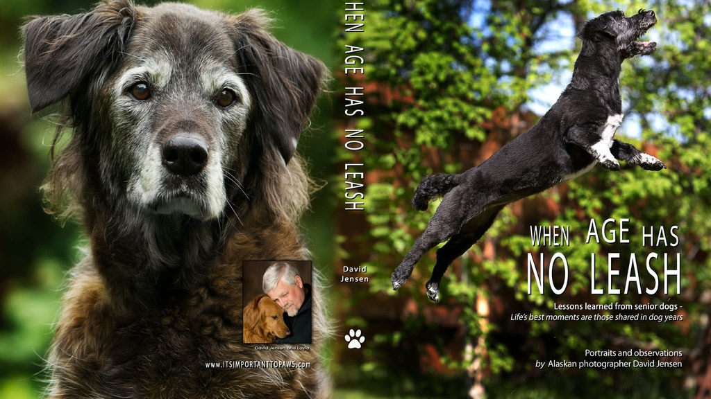 When Age Has No Leash.    Lessons learned from senior dogs. project video thumbnail